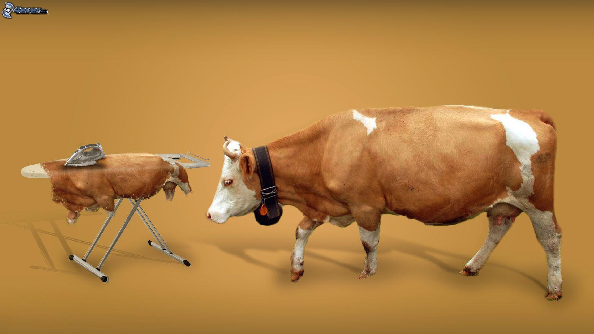 da bò nhập khẩu italia